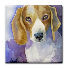Beagle dog head study