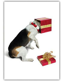 Beagle christmas cards