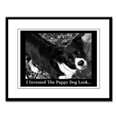 Border Collie Photo Art