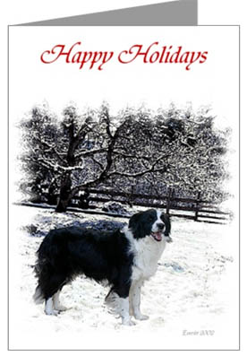 Christmas puppies and adult Border Collies; more christmas greeting cards ...