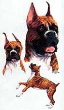 boxer dog sweatshirts tshirts
