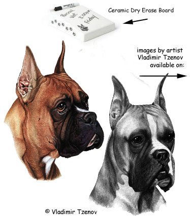 Boxer dog porcelain