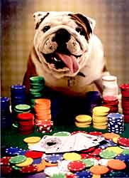 Bulldog Playing Poker Birthday Card