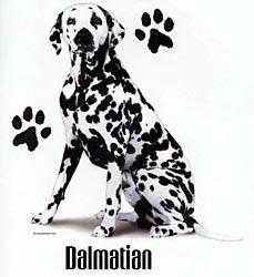 Dalmatian Shirts