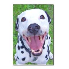 Happy Dalmatian Dog