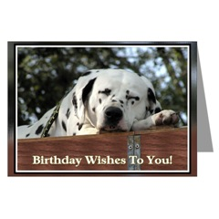 Sleeping Dalmatian Birthday Cards