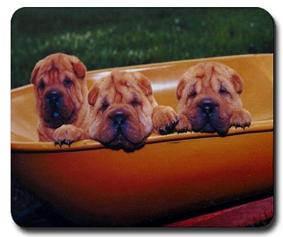 Shar Pei gifts