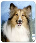 Sheltie Sable Mouse Pad