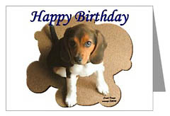 the beagle shop  greeting cards, notecards, postcards, Birthday card