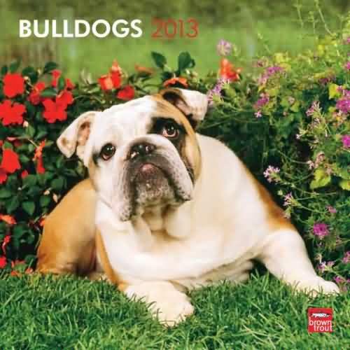 Bulldog Bad Boys 2013 Wall Calendar Bulldog Calendars And